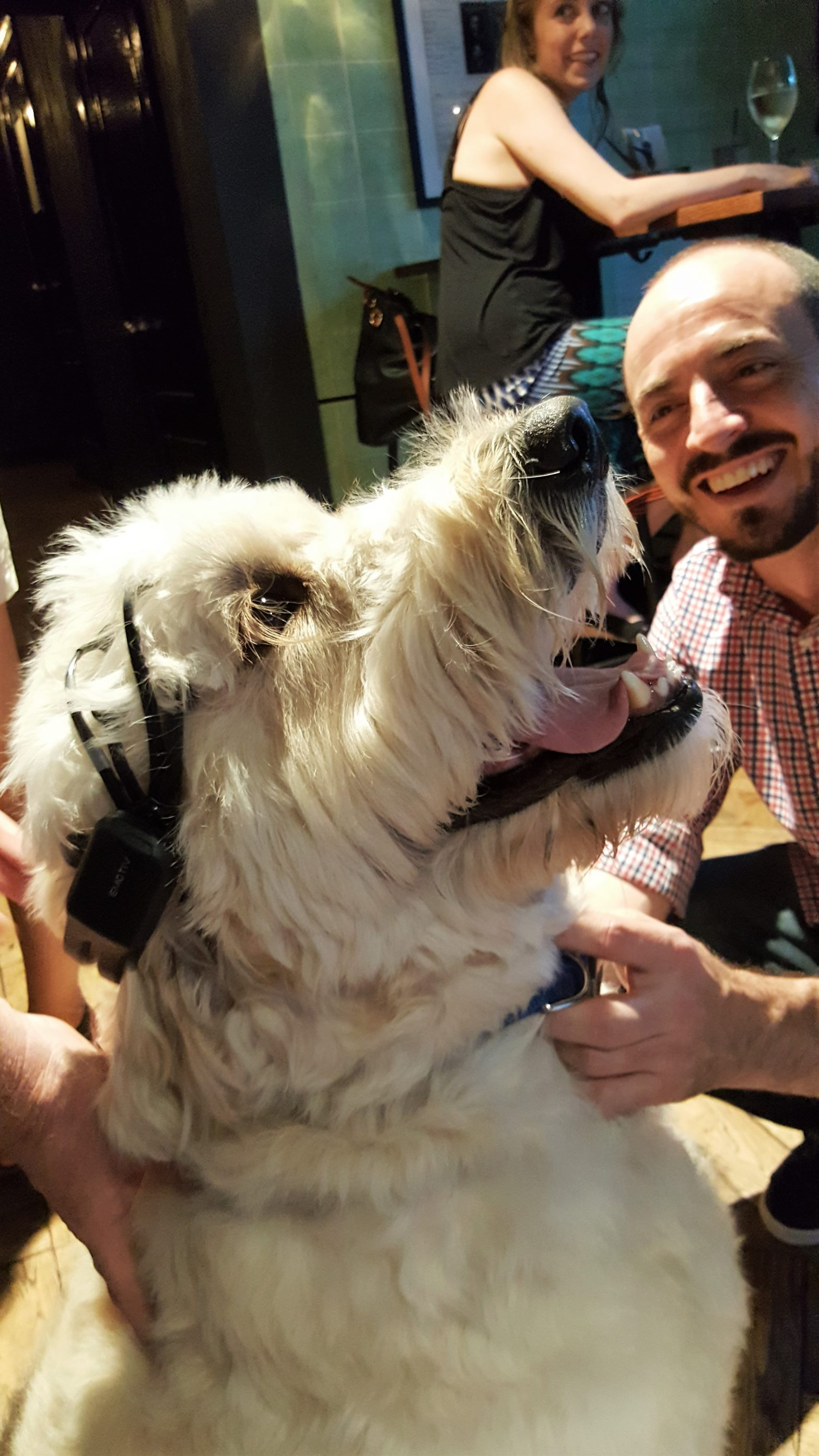 Dogs and brainwaves